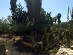 cactus-park3