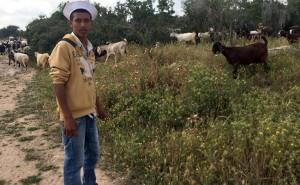 Goat herder near midras ruins